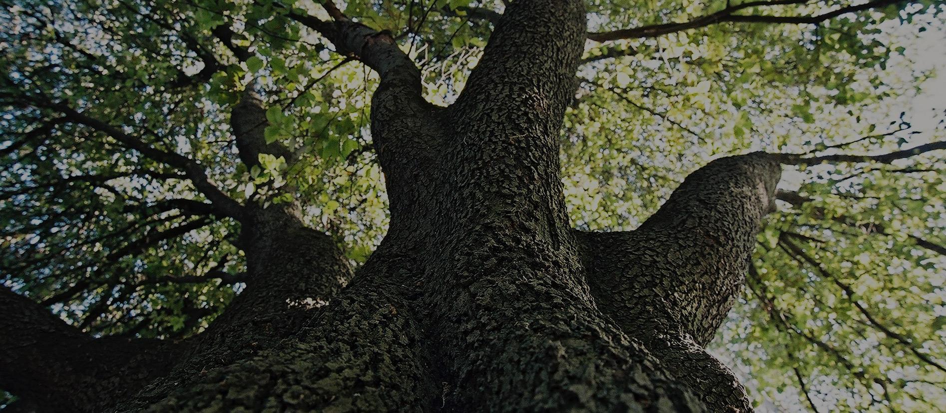 amore per la natura e gli alberi