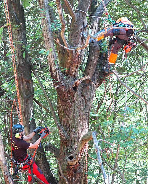 potatura e gestione degli alberi